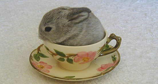 Rabbits on Chairs