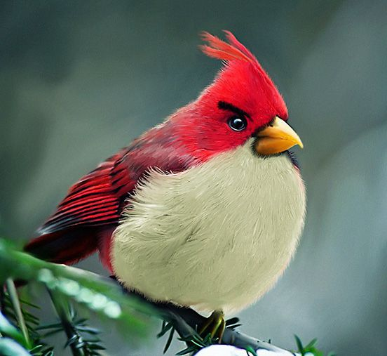 Real Life Angrybirds Red Bird
