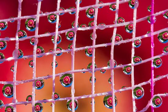 Flower in the Drops