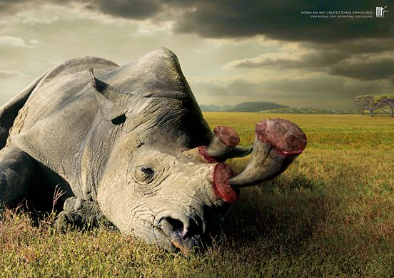 Horns Are Not Created to Kill Rhinoceros