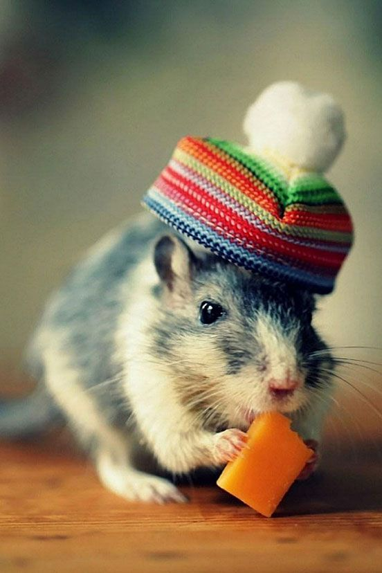 Mouse Cheese Hat Funny