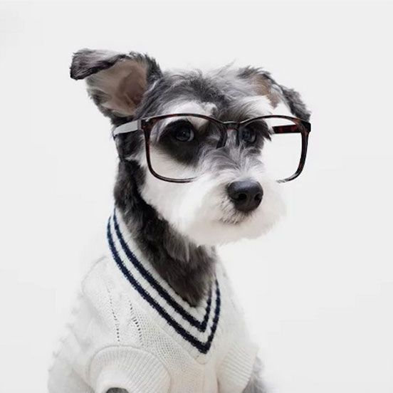 Dogs Styles